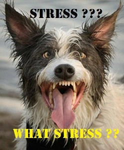 funny-pictures-humor-stress-dog